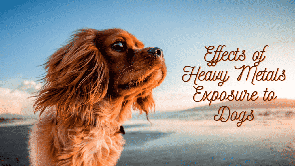 Effects of Heavy Metals Exposure to Dogs